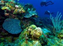 Colorfull rev och grupp av dykare, Kuba Royaltyfria Foton