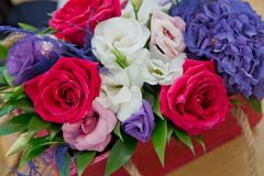 Colorfull rosor Närbildfoto av ett rött, en whitw och bakgrunder för rosrosbonteque Steg i dag för valentin` s Royaltyfria Foton