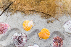 Colorfull Sea shells sand board Stock Images