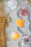 Colorfull Sea shells sand board Stock Photography
