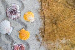 Colorfull Sea shells sand board Royalty Free Stock Image