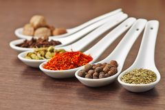 Colorfull Spices in a Ceramic Spoons Royalty Free Stock Photography