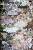 Tree Bark Textures Royalty Free Stock Photography