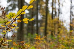 Forest in fall Royalty Free Stock Photos