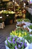 Colorfull-Tulpen Stockfotografie
