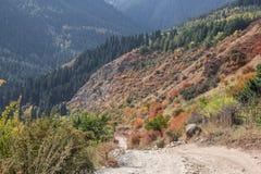 Colorfull-Wald auf dem Weg Stockbild
