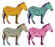Colorfull Zebra collection - pop art color vector  Royalty Free Stock Image