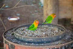 Colorfullvogel royalty-vrije stock foto