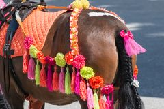 Colorfully dressed horse for walking small children royalty free stock images