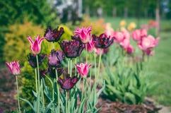 Colorfully en vernally royalty-vrije stock fotografie