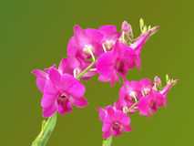 Colorfully flower,  background,plant,decoration,orchid,beautiful orchid Stock Photos