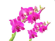 Colorfully flower,  background,plant,decoration,orchid,beautiful orchid Royalty Free Stock Photo
