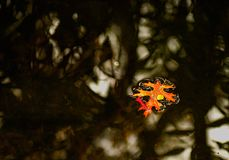 colorfulnesslast Fotografering för Bildbyråer