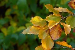 Colorfult jesieni liście na gałązce Zdjęcia Stock