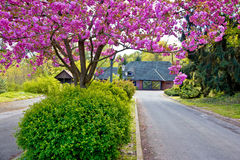 Colorfun nature view - old cottage Royalty Free Stock Photography