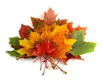 Colori 6 di autunno Immagine Stock