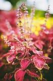 colori Fotografia Stock