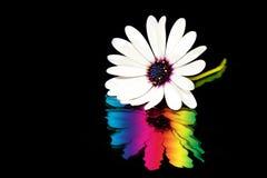 Colori allineare Fotografia Stock