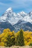Colori autunnali nel grande parco nazionale di Teton Immagini Stock Libere da Diritti