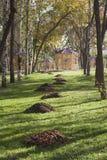 Colori chiari dell'autunno Fotografia Stock