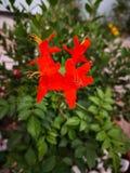 Colori del defrint dei fiori fotografia stock libera da diritti