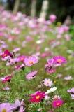 Colori del fiore Fotografie Stock