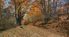 Colori del percorso della montagna di autunno Immagini Stock