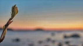 Colori del tramonto fotografia stock