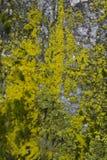 Colori dell'albero del muschio Immagini Stock Libere da Diritti