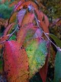 Colori dell'autunno Immagini Stock Libere da Diritti