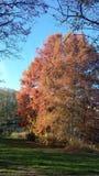 Colori dell'autunno immagini stock