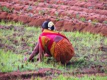 Colori dell'India Immagine Stock Libera da Diritti
