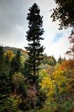 Colori della foresta di autunno nelle montagne di Rychlebske Fotografia Stock