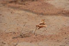 Colori della sabbia Immagine Stock