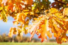 Colori delle stagioni cambianti Fotografie Stock Libere da Diritti
