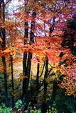 Colori di Autumn Forest Fotografia Stock