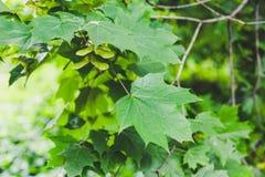 Colori 9 di autunno immagine stock libera da diritti