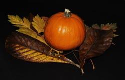Colori di autunno Fotografia Stock Libera da Diritti