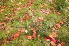 Colori di autunno. Fotografia Stock Libera da Diritti