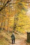 Colori di autunno Immagini Stock Libere da Diritti