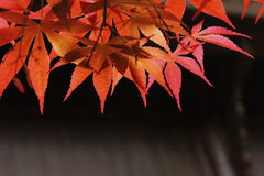 Colori 9 di autunno Fotografie Stock Libere da Diritti