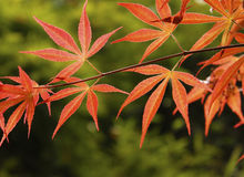 Colori 9 di autunno Immagini Stock Libere da Diritti