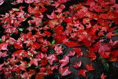 Colori 9 di autunno Fotografie Stock