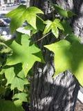 Colori 9 di autunno Immagini Stock