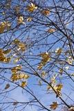 Colori 9 di autunno Immagine Stock