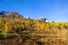 Colori di autunno Immagini Stock