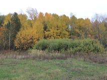 Colori di autunno - alberi gialli Fotografie Stock
