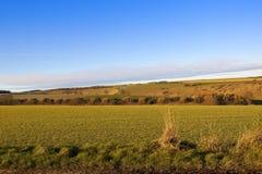 Colori di autunno dei wolds di Yorkshire Fotografia Stock