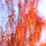 Colori di autunno della ciliegia mancese fotografie stock