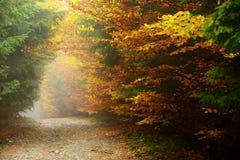 Colori di autunno della foresta Fotografie Stock